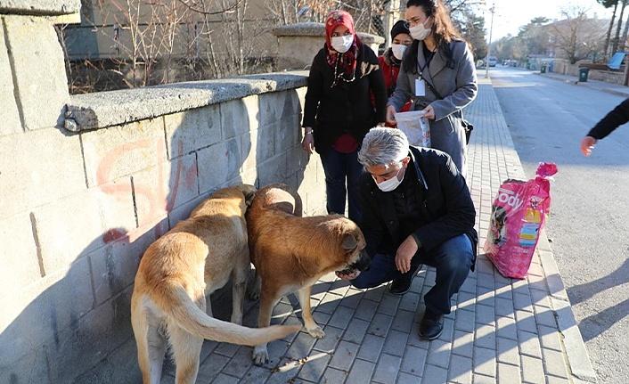 Erzincan Valisi, kısıtlamada aç kalan hayvanları elleriyle besledi