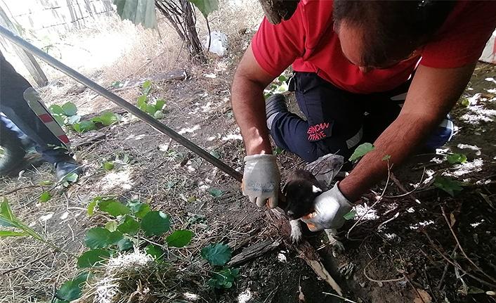 Kuyuya düşen 3 yavru köpek kurtarıldı