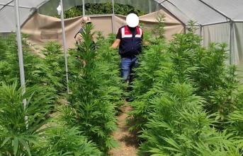 Serada uyuşturucu üretimine jandarma baskını