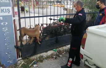 Kapıya sıkışan köpeği itfaiye kurtardı