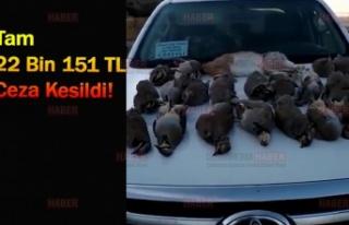 Kaçak keklik avcıları yakalandı