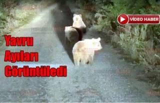 Önüne çıkan yavru ayıları görüntüledi
