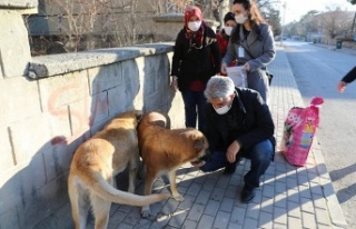 Erzincan Valisi, kısıtlamada aç kalan hayvanları...
