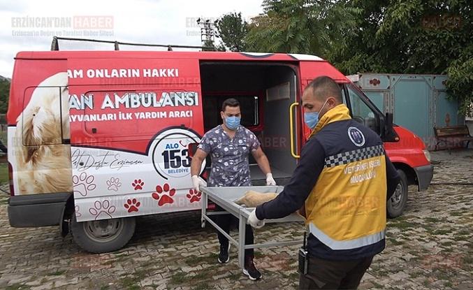 Erzincan'da hayvan ambulansı hizmete başladı
