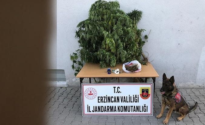 Jandarmadan İki Ayrı Kaçakçılık ve Uyuşturucu Operasyonu!